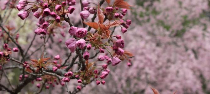 野の花山荘の朝と奥飛騨温泉郷散策