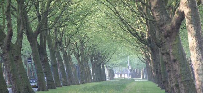 アムステルダムの朝の散歩
