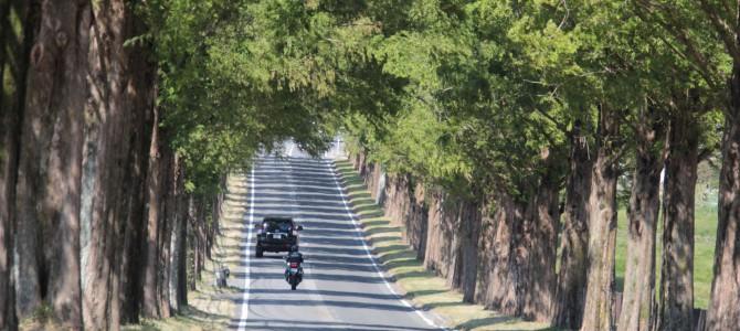 滋賀県高島市のマキノ高原 メタセコイヤ並木の下見