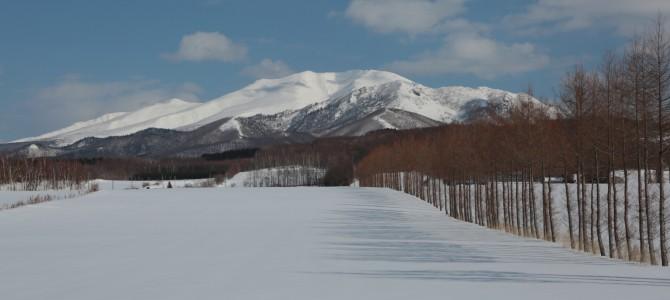 道東、釧路から羅臼 鳥撮影の旅 プランと費用