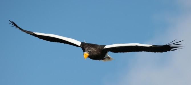 道東、鳥撮影の旅 2日目のクルーズ船 2回目